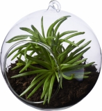Seasons Terrarium Sphere (11291900)