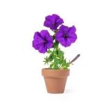 Doniczka do kwiatów, 5-8 nasion petunii i ziemia (V8883-00)