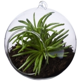 Seasons Terrarium Sphere (11291900)